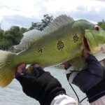 Peacock Bass fishing, peacock bass guide, peacock bass fishing guide, colombia
